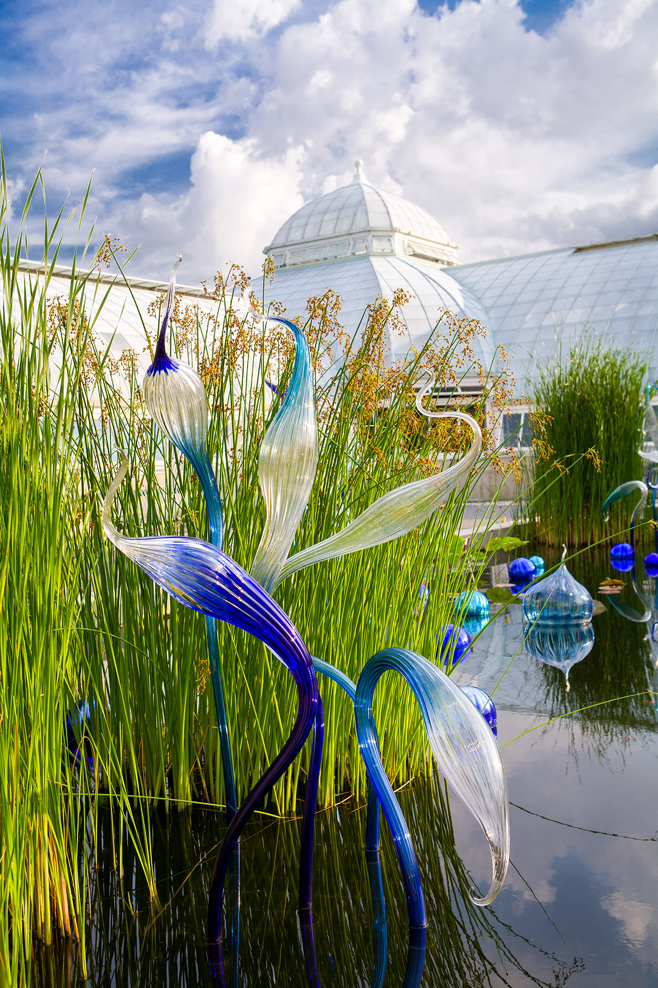 CHIHULY sculpture among water plants