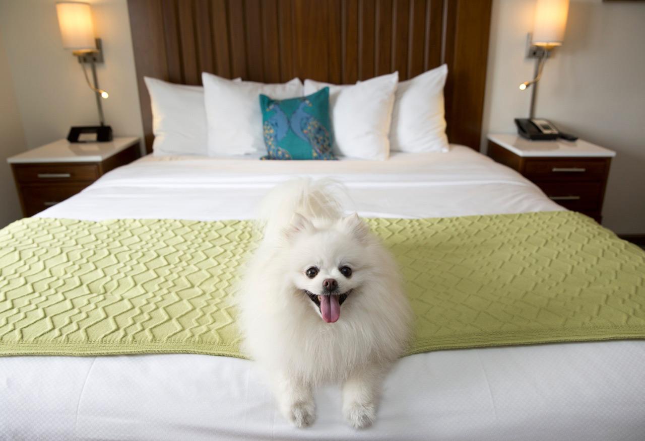The Alfond Inn Pet Friendly Room